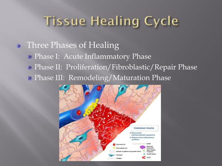 Tissue Healing Cycle