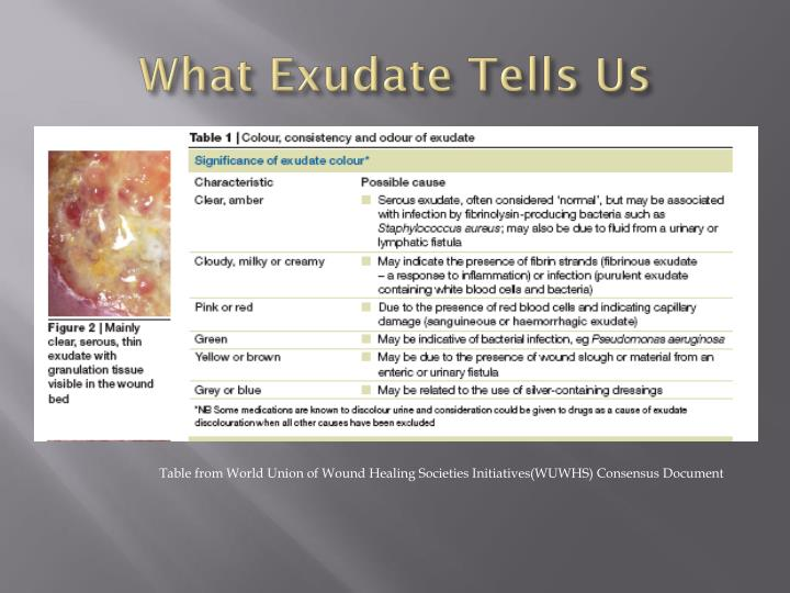 What Exudate Tells Us