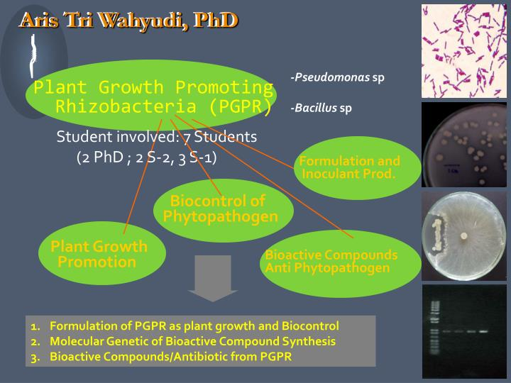 Aris Tri Wahyudi, PhD