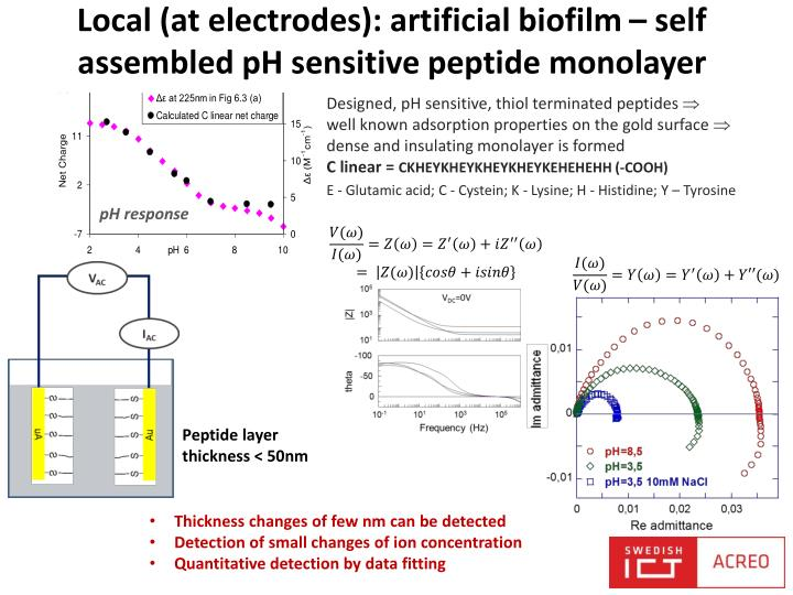 Local (at electrodes): artificial biofilm – self assembled pH sensitive peptide monolayer