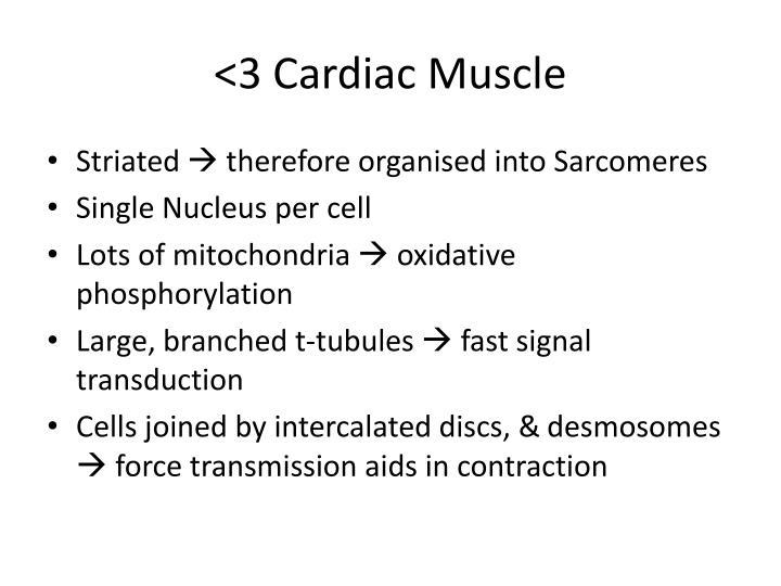 <3 Cardiac Muscle