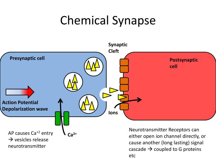 Chemical Synapse