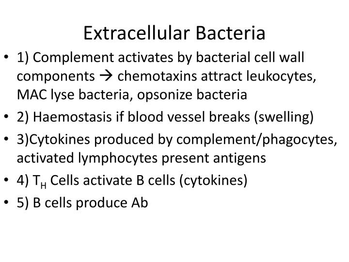 Extracellular Bacteria