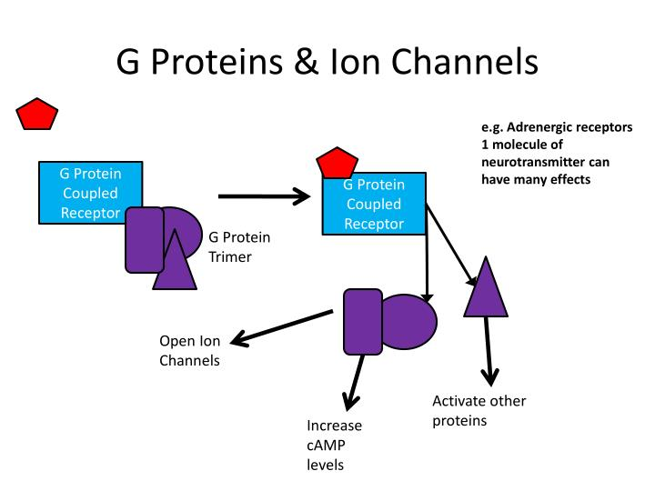 G Proteins & Ion Channels