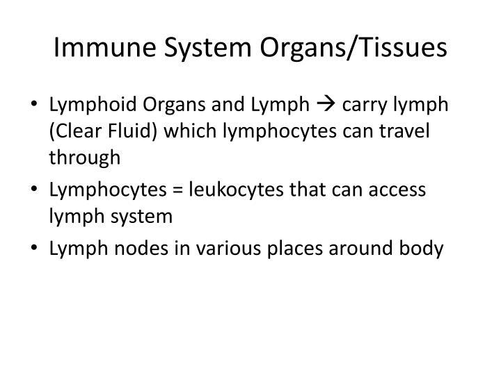 Immune System Organs/Tissues