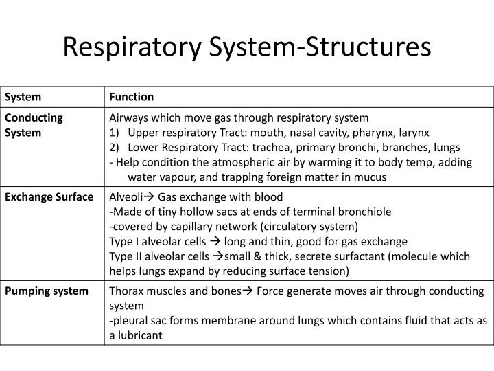 Respiratory System-Structures