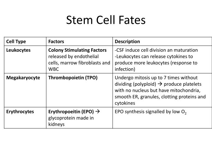 Stem Cell Fates