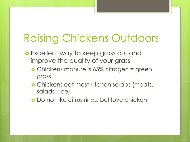 Raising Chickens Outdoors