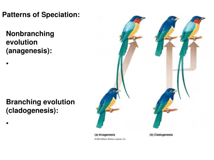 Patterns of Speciation:
