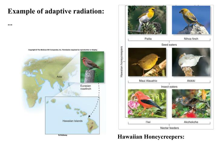 Example of adaptive radiation:
