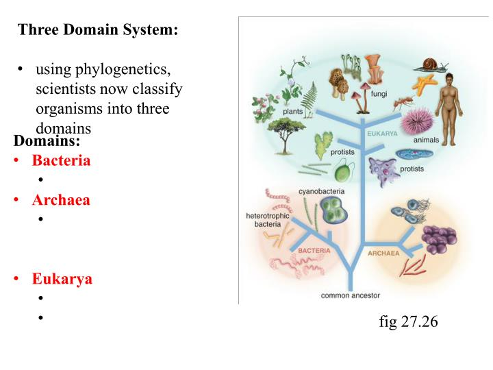 Three Domain System: