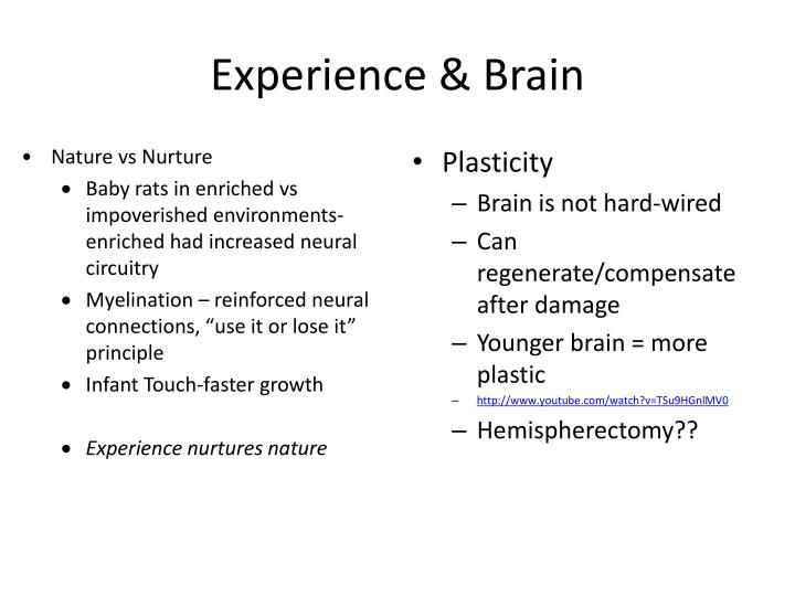 Experience & Brain
