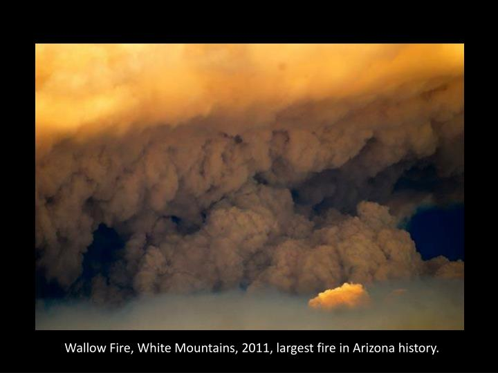 Wallow Fire, White Mountains, 2011, largest fire in Arizona history.