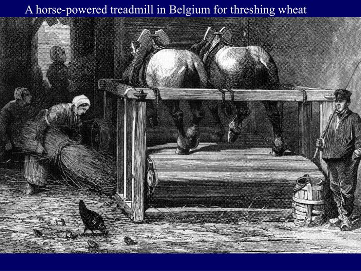 A horse-powered treadmill in Belgium for threshing wheat
