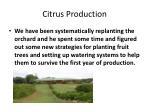 citrus production1