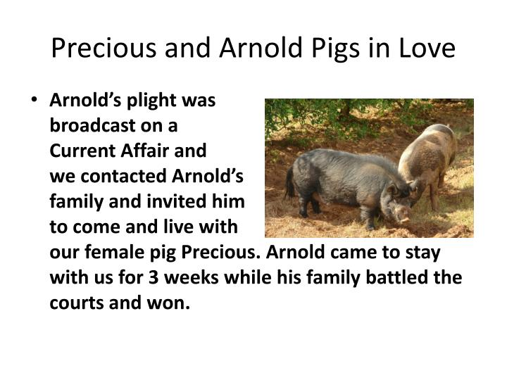 Precious and Arnold Pigs in Love