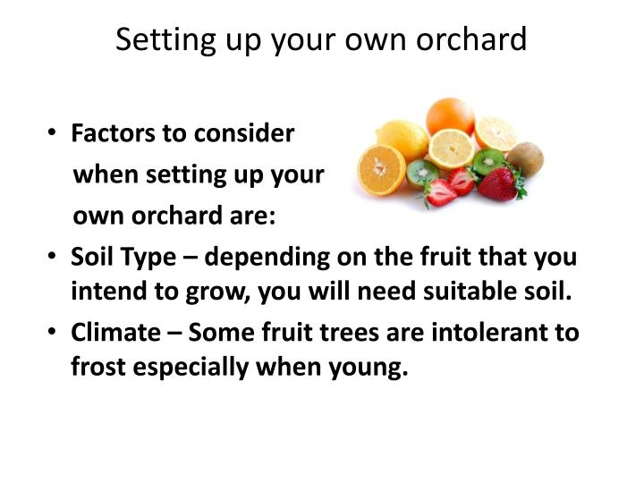 Setting up your own orchard