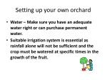 setting up your own orchard1