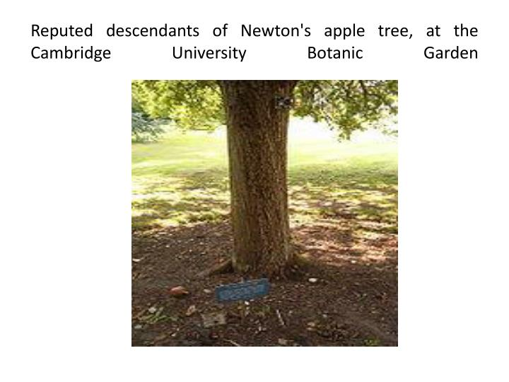 Reputed descendants of Newton's apple tree, at the Cambridge University Botanic Garden