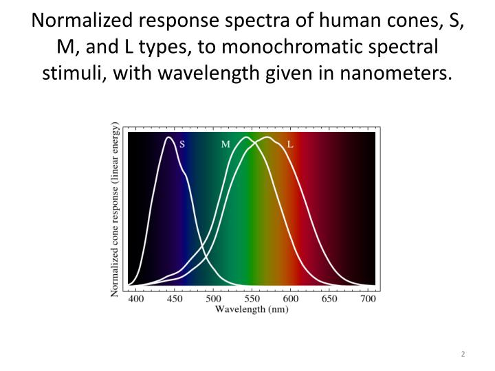 Normalized response spectra of human cones, S, M, and L types, to monochromatic spectral stimuli, with wavelength given in nanometers.