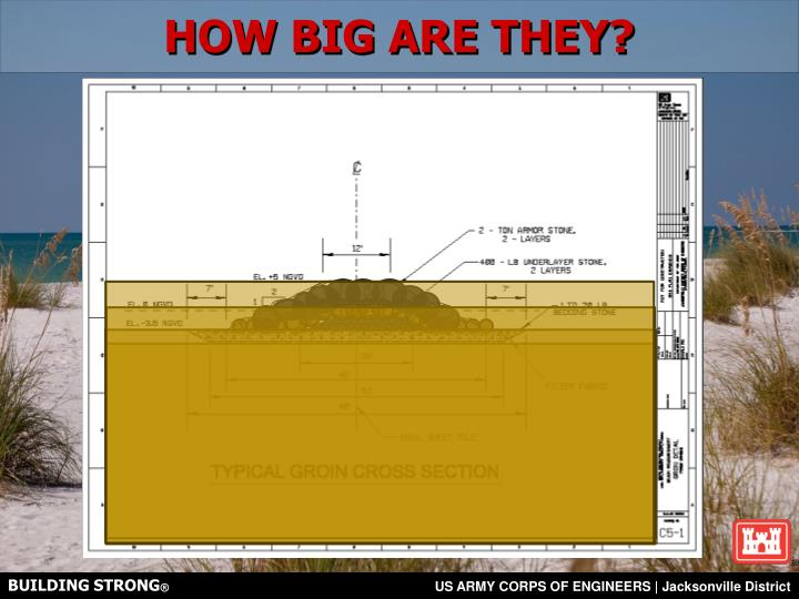 HOW BIG ARE THEY?