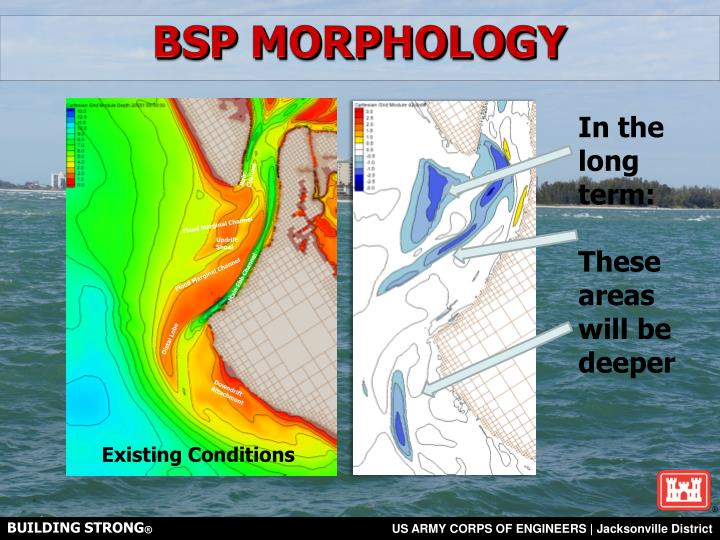 BSP MORPHOLOGY