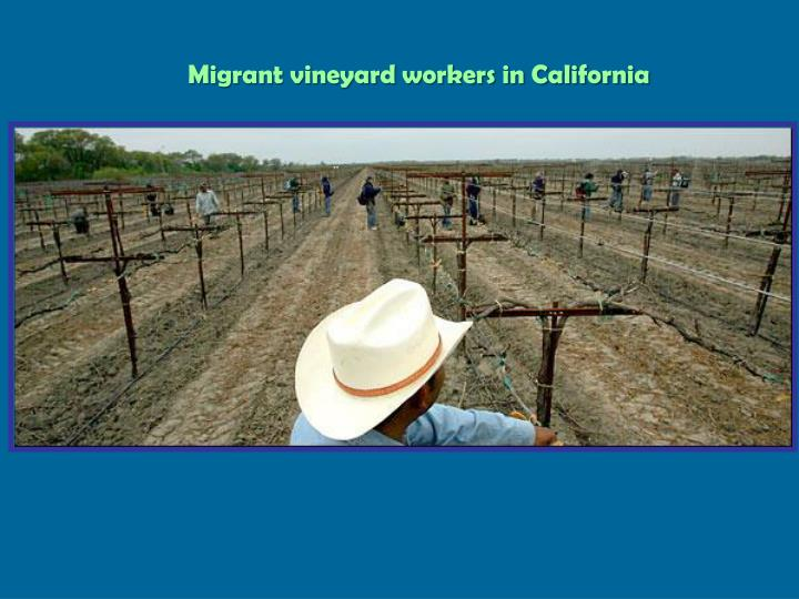 Migrant vineyard workers in California