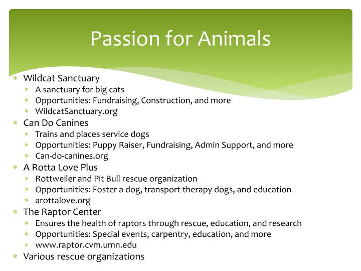 Passion for Animals