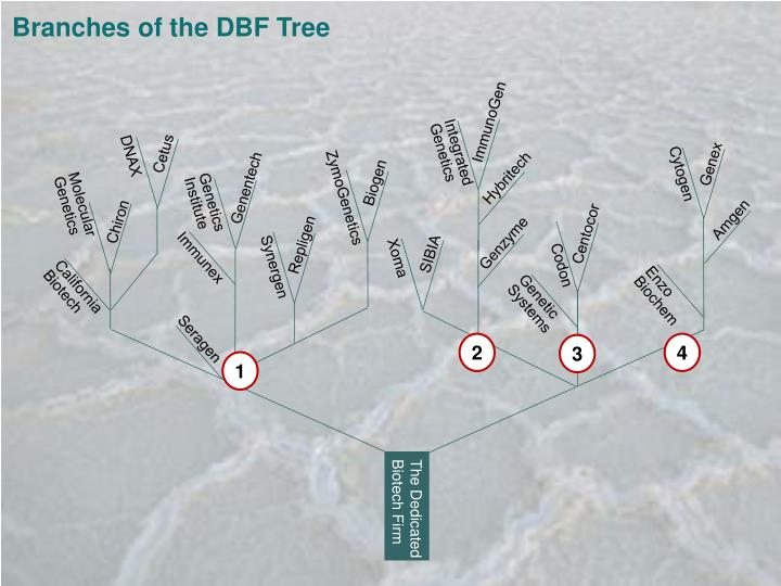 Branches of the DBF Tree