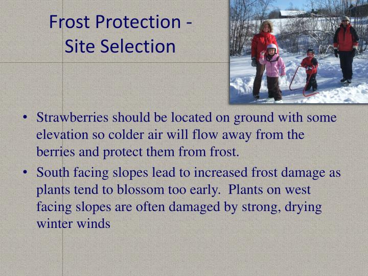 Frost Protection -