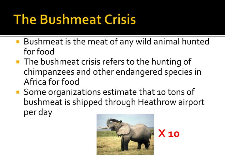 The Bushmeat Crisis