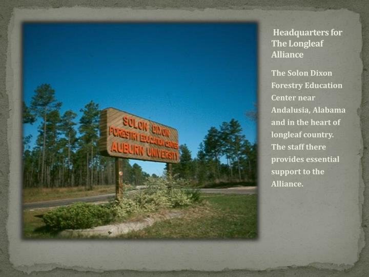 Headquarters for The Longleaf Alliance