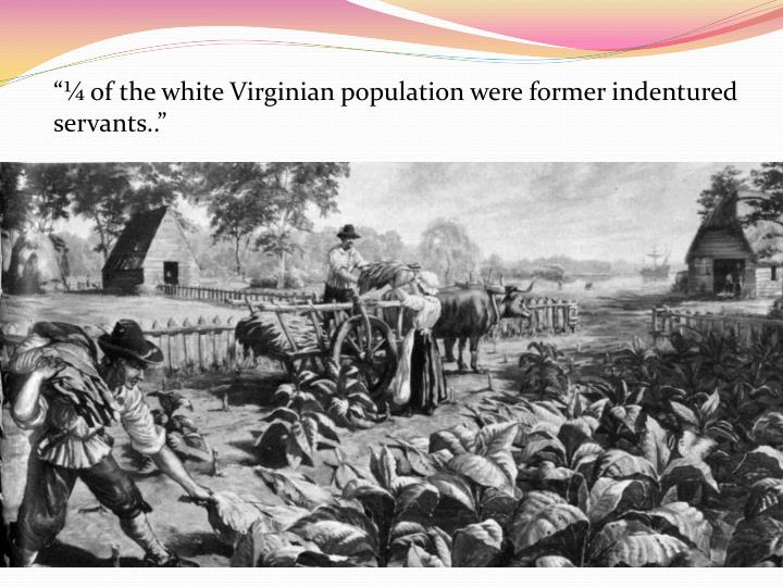 """¼ of the white Virginian population were former indentured servants.."""