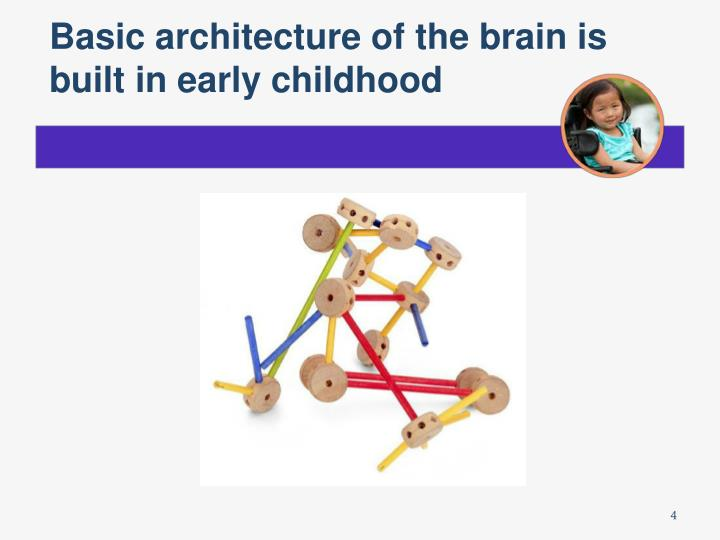 Basic architecture of the brain is built in early childhood