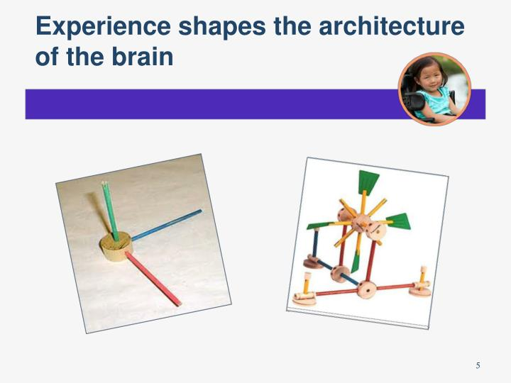 Experience shapes the architecture of the brain