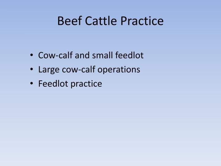 Beef Cattle Practice