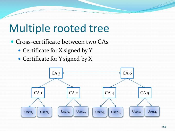 Multiple rooted tree