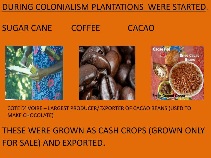 DURING COLONIALISM PLANTATIONS  WERE STARTED