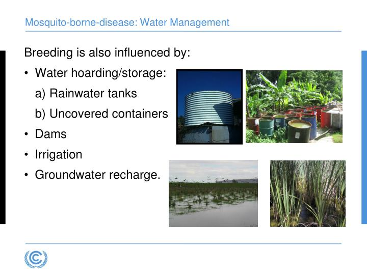 Mosquito-borne-disease: Water Management