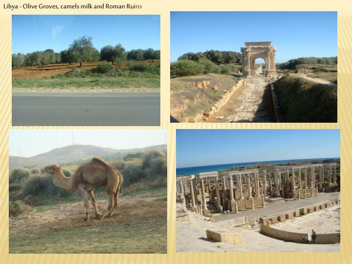 Libya - Olive Groves, camels milk and Roman Rui