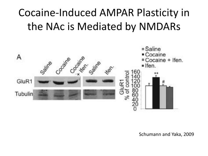 Cocaine-Induced AMPAR Plasticity in the