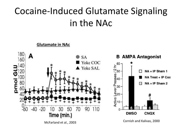 Cocaine-Induced Glutamate Signaling in the