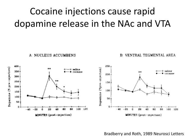 Cocaine injections cause rapid dopamine release in the