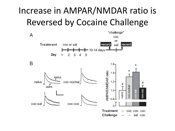 Increase in AMPAR/NMDAR ratio is Reversed by Cocaine Challenge