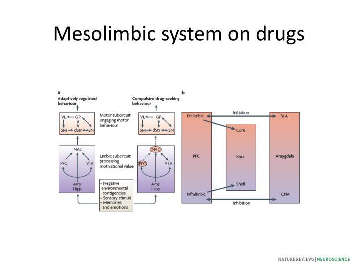 Mesolimbic