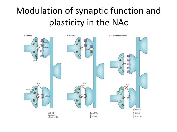 Modulation of synaptic function and plasticity in the