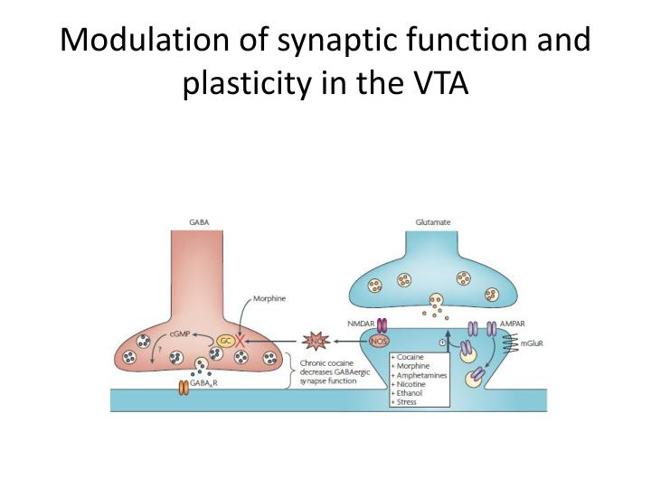 Modulation of synaptic function and plasticity in the VTA