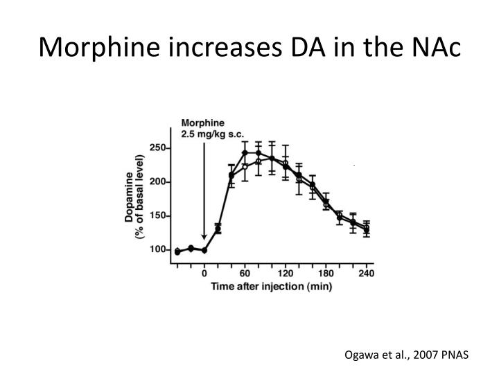 Morphine increases DA in the