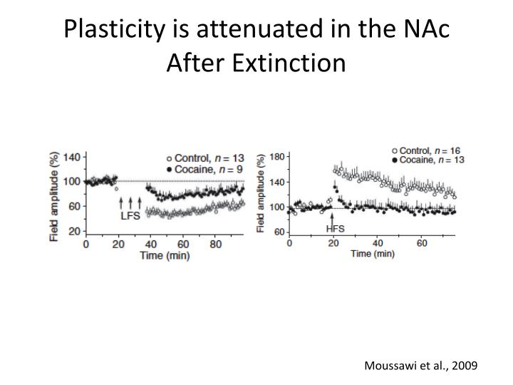 Plasticity is attenuated in the