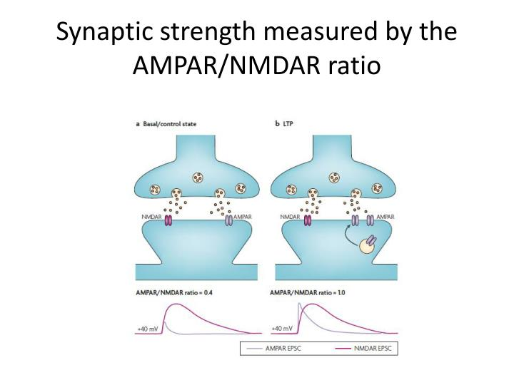 Synaptic strength measured by the AMPAR/NMDAR ratio